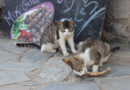 Tipps zum Katzenschutz im Urlaub
