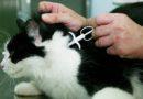 """Aktionswoche des Bundesverband praktizierender Tierärzte: """"Check meinen Chip"""""""
