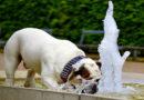Sommer, Sonne, Wasserbedarf: PETA-Expertin gibt Tipps, um Hunde, Katzen und Co. zum Trinken zu animieren