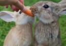 Gesundheit und Wohlbefinden der Tiere hängt von Verdauung ab