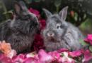 Kaninchen sind keine Kuscheltiere