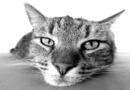 Tier gefunden – Was tun?