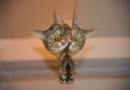 Erste Millionenstadt beschließt Katzenschutzverordnung