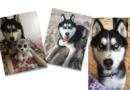 Tier der Woche – Bitte teilen!