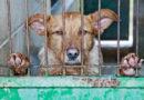 TASSO zum gestrigen Welthundetag: Die problematische Situation der deutschen Tierheime