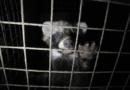 Massive Verstöße gegen EU-Verordnung zur Kennzeichnung von Echtpelz. Tierschutzbündnis stellt brisanten Report im EU-Parlament vor.