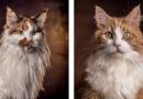 Hilfreiche Tipps zur Tierfotografie und Fotobearbeitung