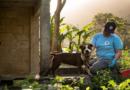 Nach Hurricane in Puerto Rico: VIER PFOTEN verpflegt zurückgelassene Tiere