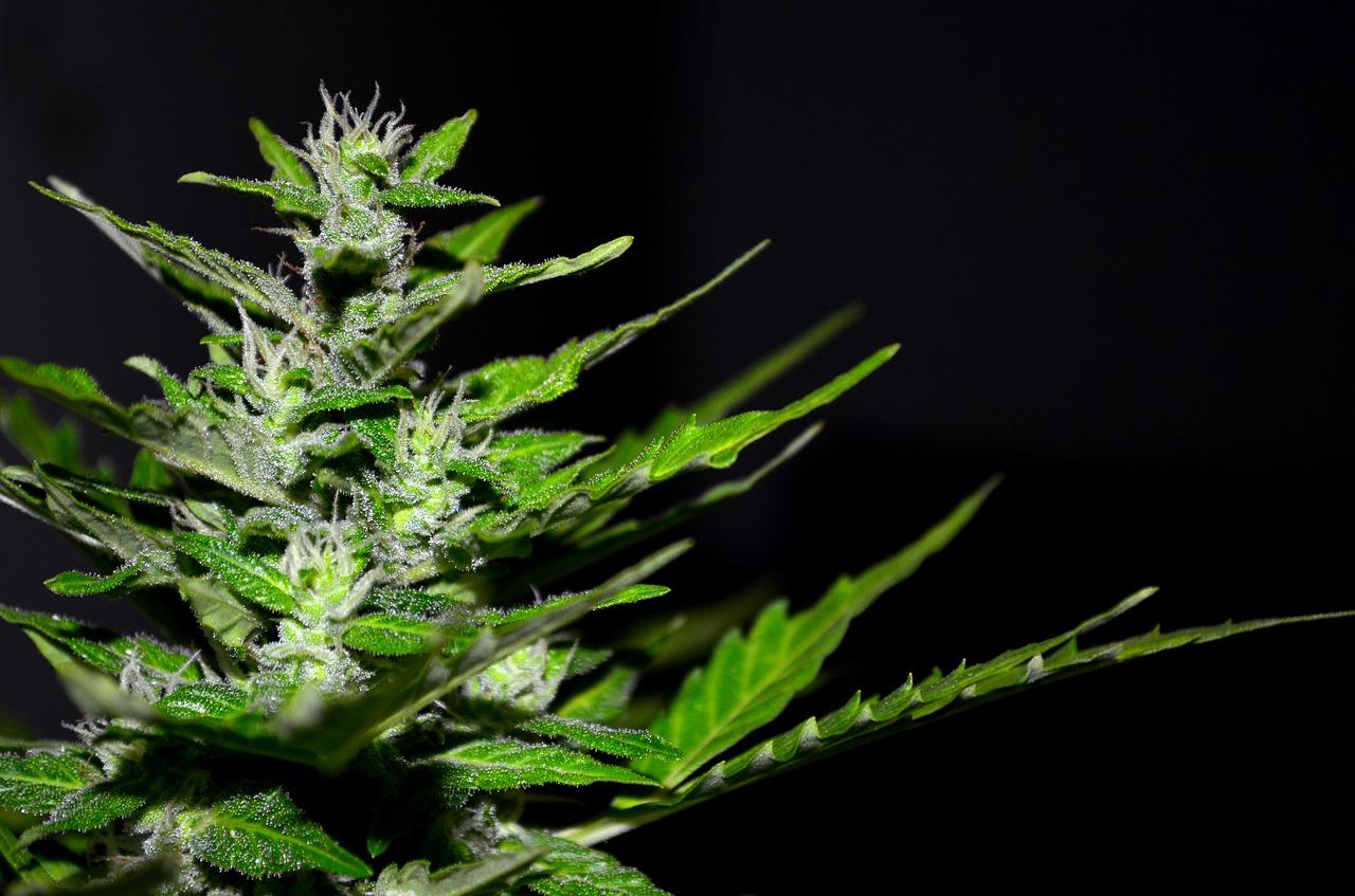 Baunatal: Baunataler Polizisten entdecken Cannabisanbau im Keller eines 51-Jährigen