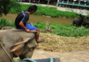 PETA fordert deutsche Reiseveranstalter auf, tierquälerische Attraktion zu streichen