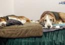 Die Jagd & Hund startet wieder Ende Januar