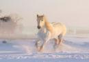 Tiergerechte Pferdehaltung bei Minusgraden – PETA-Expertin gibt Tipps für einen sicheren Winter