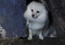 Welpenhändler packt über illegale Geschäfte auf eBay Kleinanzeigen aus. VIER PFOTEN fordert Ende des anonymen Tierhandels.