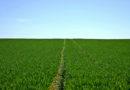 Vier neue Biobauern erhalten Förderpreis