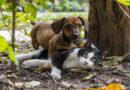 TASSO veröffentlicht die beliebtesten Tiernamen des Jahres 2017