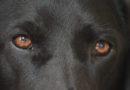 Signale des Vierbeiners richtig deuten: PETA-Expertin gibt Tipps für die gelungene Kommunikation zwischen Hund und Mensch
