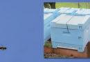 Thüringer Polizei bittet um Hinweise auf zehn gestohlene Bienenvölker