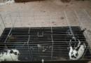 Aufreger des Tages: Vier Zwergkaninchen auf Parkplatz ausgesetzt