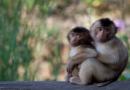 Deutscher Tierschutzbund begrüßt Strafbefehle gegen Tübinger Affenforscher