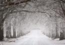 Fasanenhof: Minusgrade können für Hilfsbedürftige lebensbedrohlich werden: Streife rettet 75-Jährige vorm Erfrieren