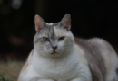 Tierisch gesund – Schlank und fit, statt dick und träge