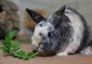 Ein Fest für alle: TASSO-Tipps für ein tierfreundliches Ostern