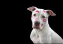Nach tödlichem Beißvorfall in Bad König: PETA fordert verpflichtenden Hundeführerschein für alle Hundehalter und Zuchtverbot für sogenannte Kampfhunderassen