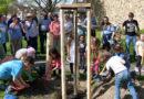 Stadt pflanzt Baum des Jahres 2018