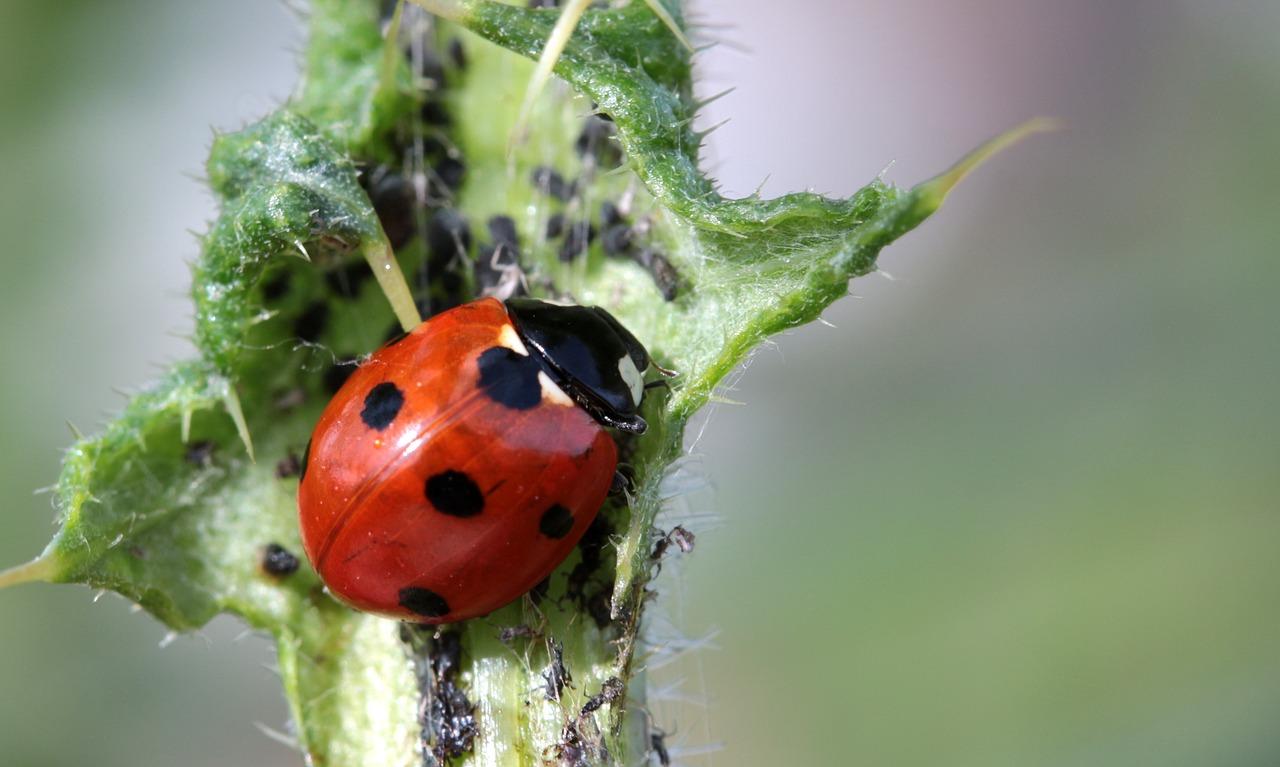 Die Gartenrowdys: Blattläuse