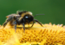 Tierische Sommeroase in der Stadt: PETA gibt Tipps für einen insekten- und vogelfreundlichen Balkon