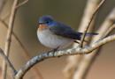 Frühlingshilfe für heimische Vögel – Nistkästen schaffen neuen Lebensraum