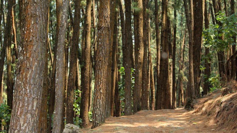 Das Einatmen der Waldatmosphäre