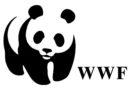 WWF: Ein kleiner Bär braucht Hilfe