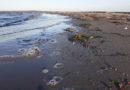 Massive Verschmutzungen durch Nord Stream 2