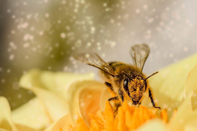 Insekten zählen, um mehr über die Artenvielfalt zu erfahren