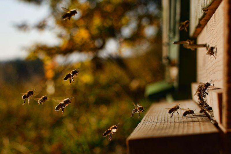 Für Bienen, Boden und Klima