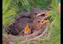Mal ne tolle Idee: Vatertag bis Muttertag mit Vögeln verbringen