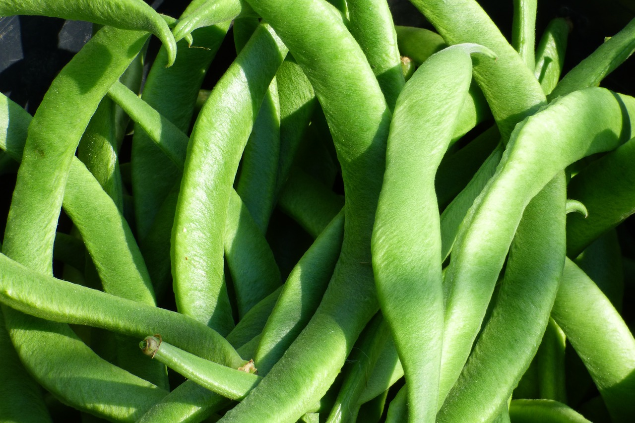 Aussaat Mai: Stangenbohnen
