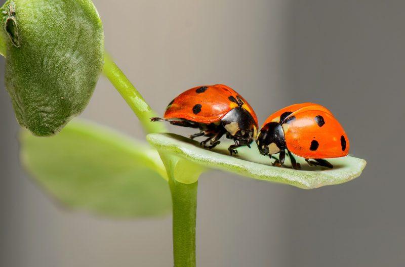 NABU: Eine Treckerbreite für den Insektenschutz