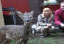 «Bambi» zieht von Menschenfamilie in Wildpark um