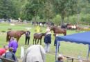 Größte hessische Pferdeschau in Fritzlar