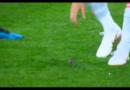 Isco und Gerard Piqué bringen winzigen Vogel während WM-Spiel gegen Iran in Sicherheit