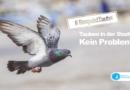 Taubenschutz: Appell an Vertreter der Städte und Gemeinden