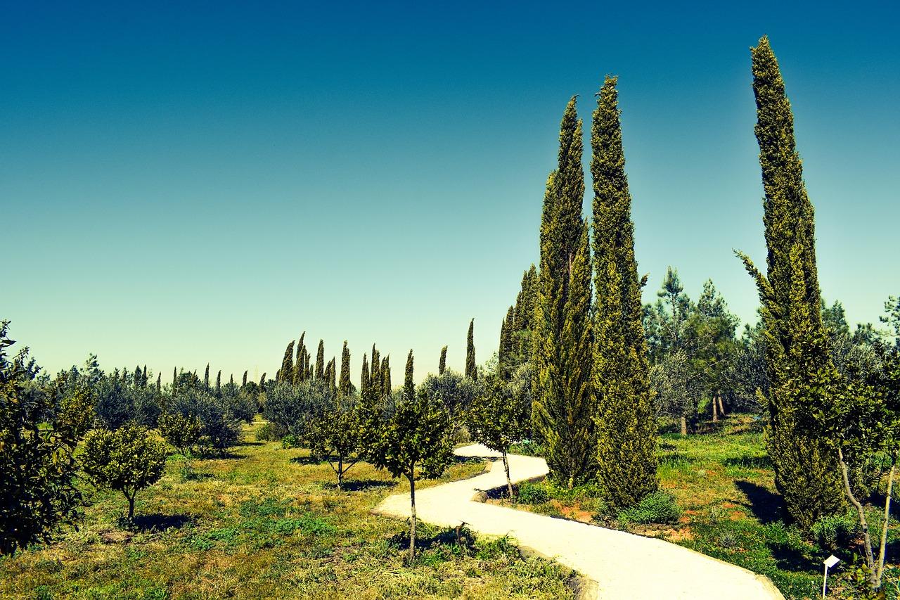Gartensträucher: Zypressen