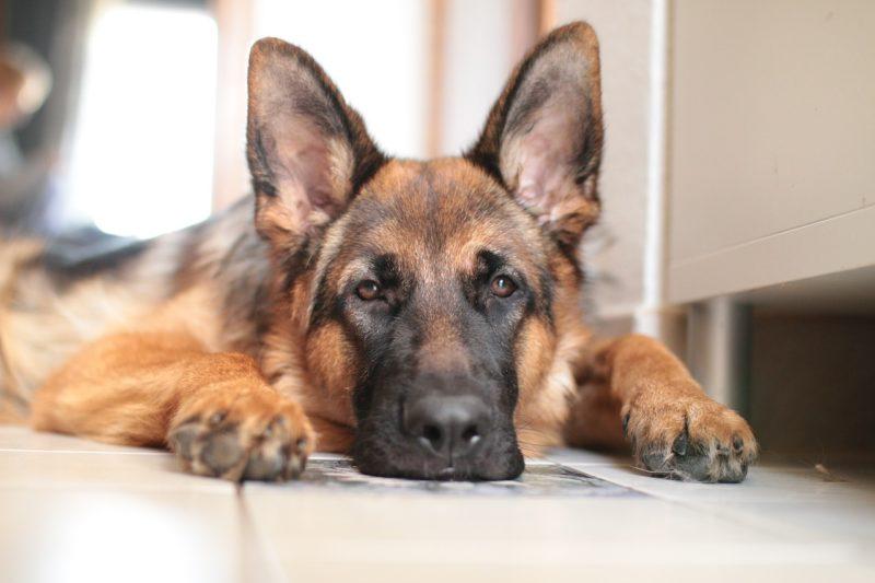 Hund im Biergarten erlaubt? Gastwirt entscheidet