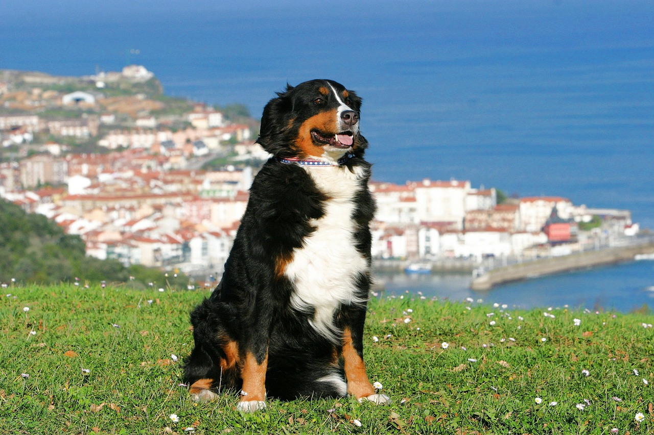 Wohin mit dem Haustier im Urlaub?