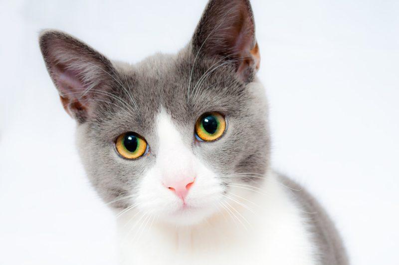 Weltkatzentag: Expertennetzwerk bekräftigt Forderung nach bundesweit einheitlicher Kennzeichnungs- und Registrierungspflicht
