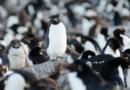 """Fressen und gefressen werden: Fünfteilige 3sat-Naturdokumentation """"Wildes Überleben"""""""
