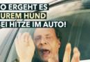 """""""Todesfalle Auto"""": Schauspieler Martin Brambach stirbt den Hitzetod in neuem PETA-Video"""