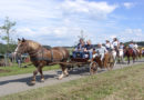 Jubiläumsfest des Reit- und Fahrvereins Sachsenberg  – Anmeldung von Kutschen und Ausstellern